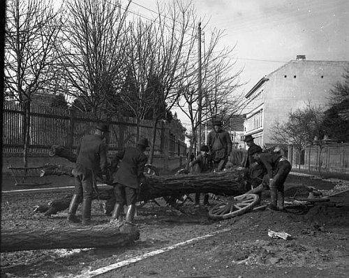 Fák kivágása és útépítés előkészítése az Képezde utcában (ma: Csatkai utca)